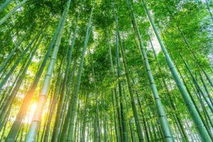 Bæredygtig tøjproduktion og bambus